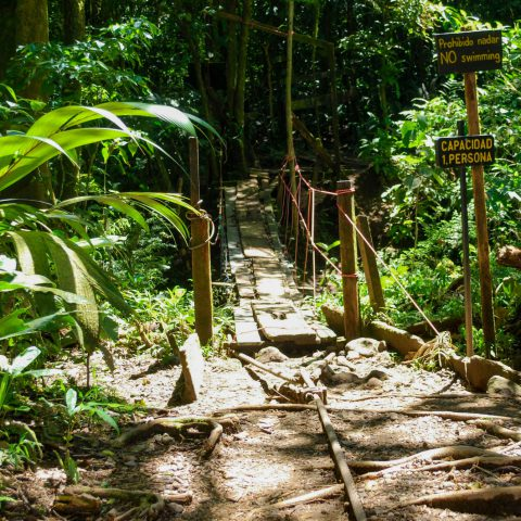 A One Person Bridge in the Rainforest of Costa Rica