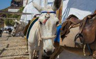 A Cute Little Donkey In Greece