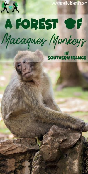 A Forest of Macaques Monkeys in Southern France Pinterest
