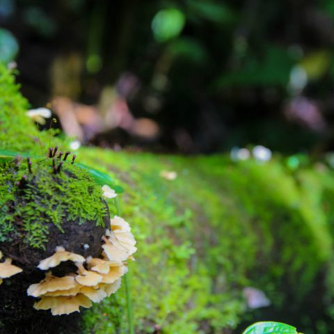 A Moss Covered Log and Some Fungi in the Rainforest