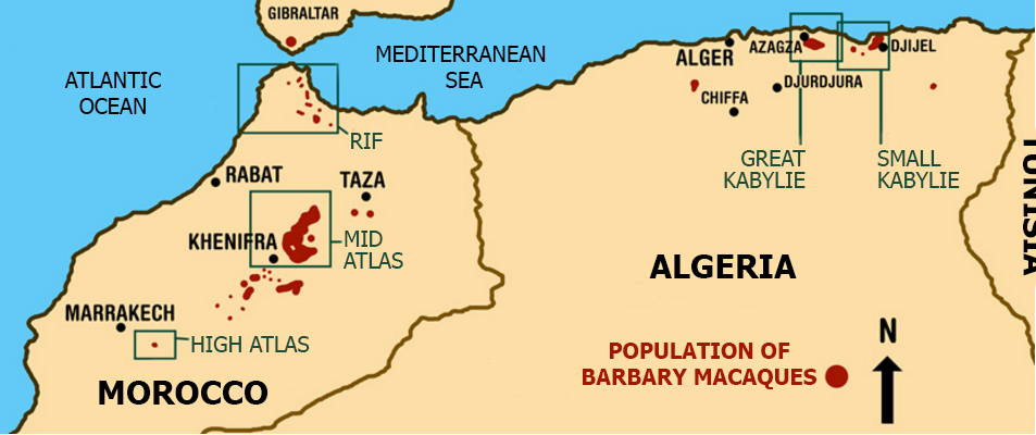 Barbary Macaques Distribution Map