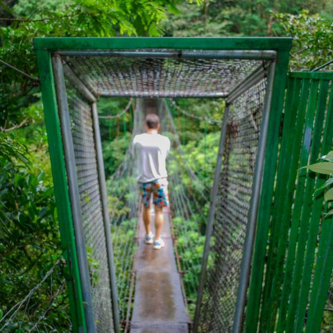The Gate to the Suspension Bridge over the Rainforest
