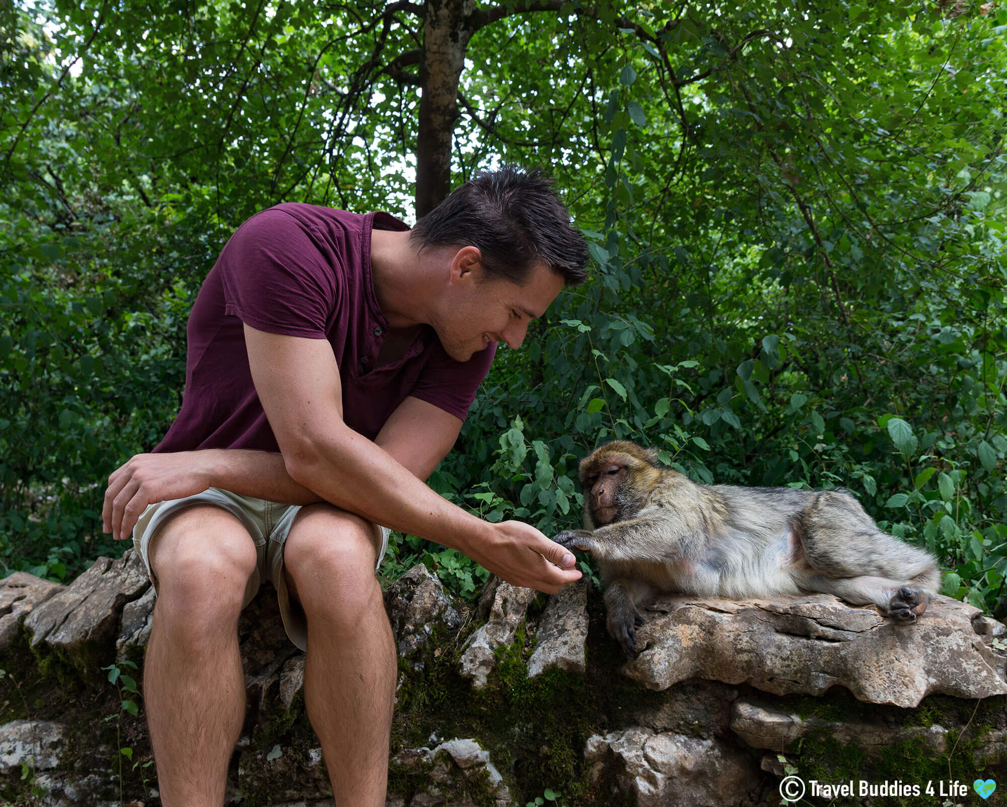 Joey Feeding A Monkey in the Monkey Centre in Southern France, Europe