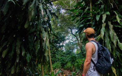 Joey Looking at the Coffee Tree's