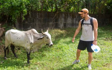 Joey and a Bull
