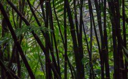 Jungle Tree's