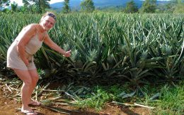 Mom with a Pineapple Field in Costa Rica