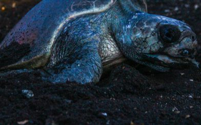 Nighttime Turtle Nesting
