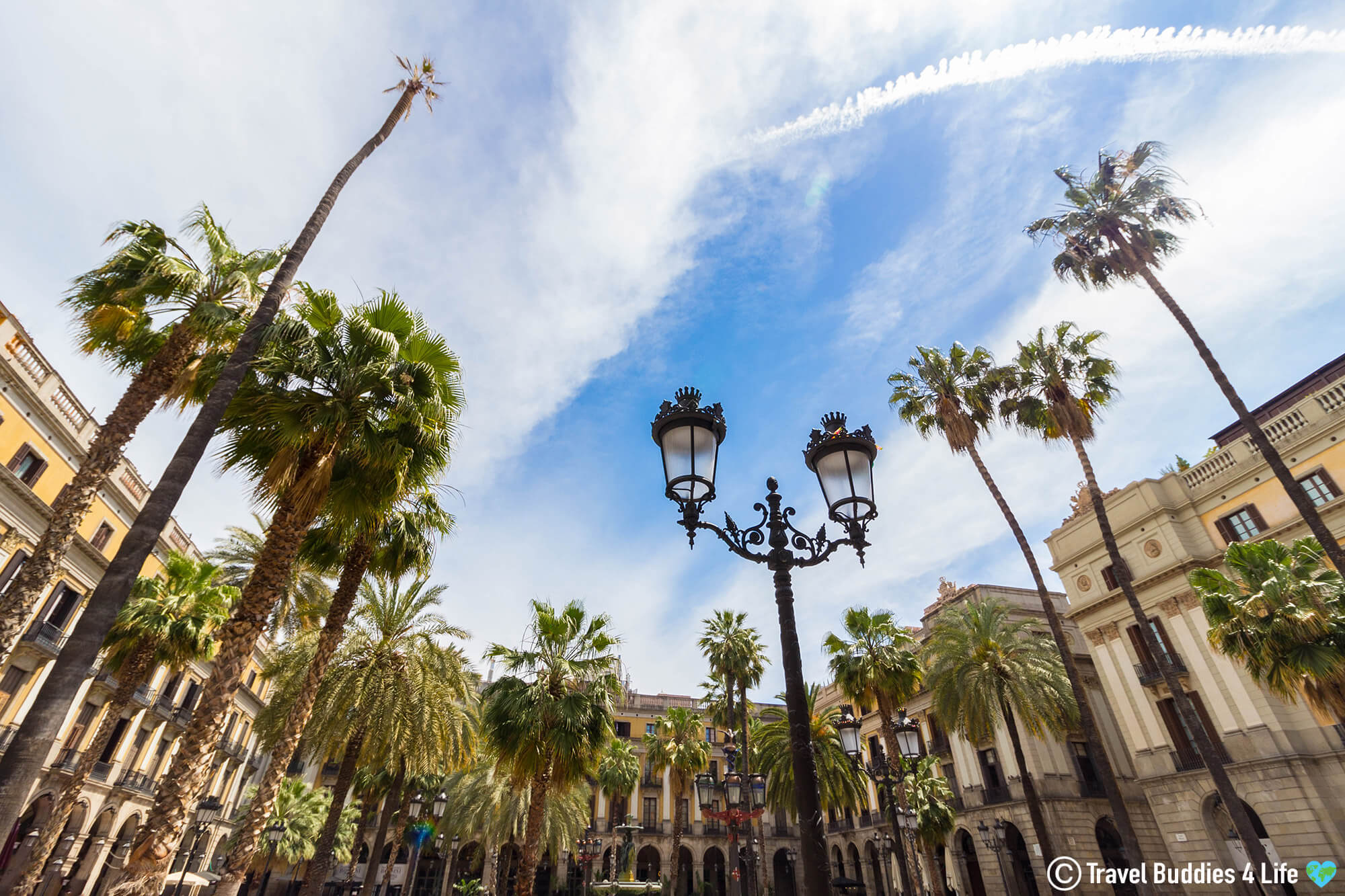 Palm Tree's of Placa Reial in the Middle of Downtown Barcelona, Spain, Europe