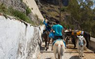 Ridding A Donkey Behind Joey Up To Fira, Greece