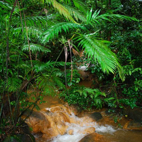 A Small Muddy Rainforest Waterfall