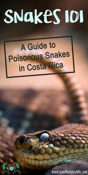Snakes 101 Costa Rica Pinterest