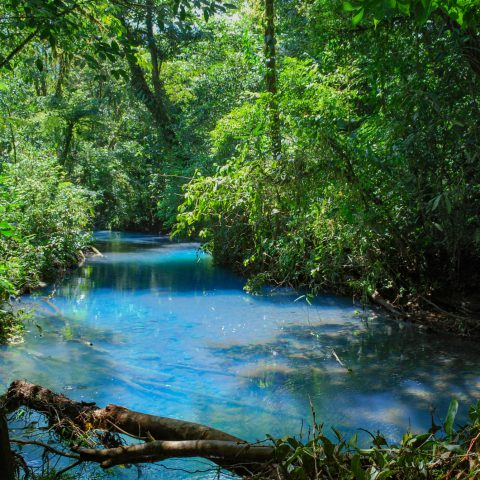 The Rio Celeste River and the Costa Rican Jungle