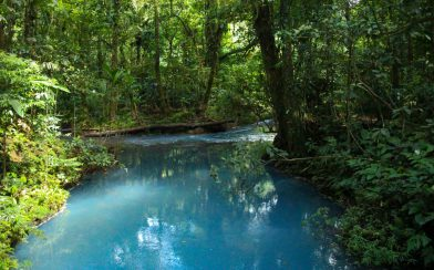 The Still Rio Celeste River in Tenorio Volcano National Park