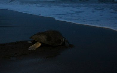 Turtle at Night