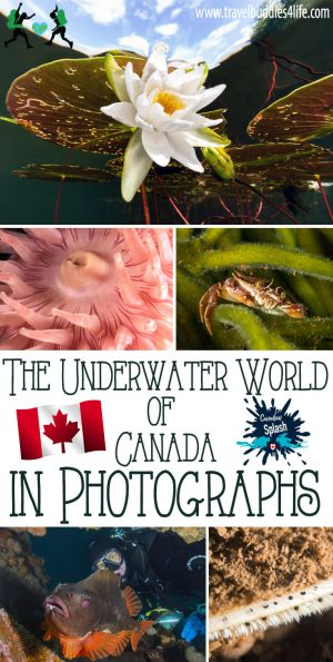 Underwater-World-of-Canada-in-Photographs,-Canadian-Splash