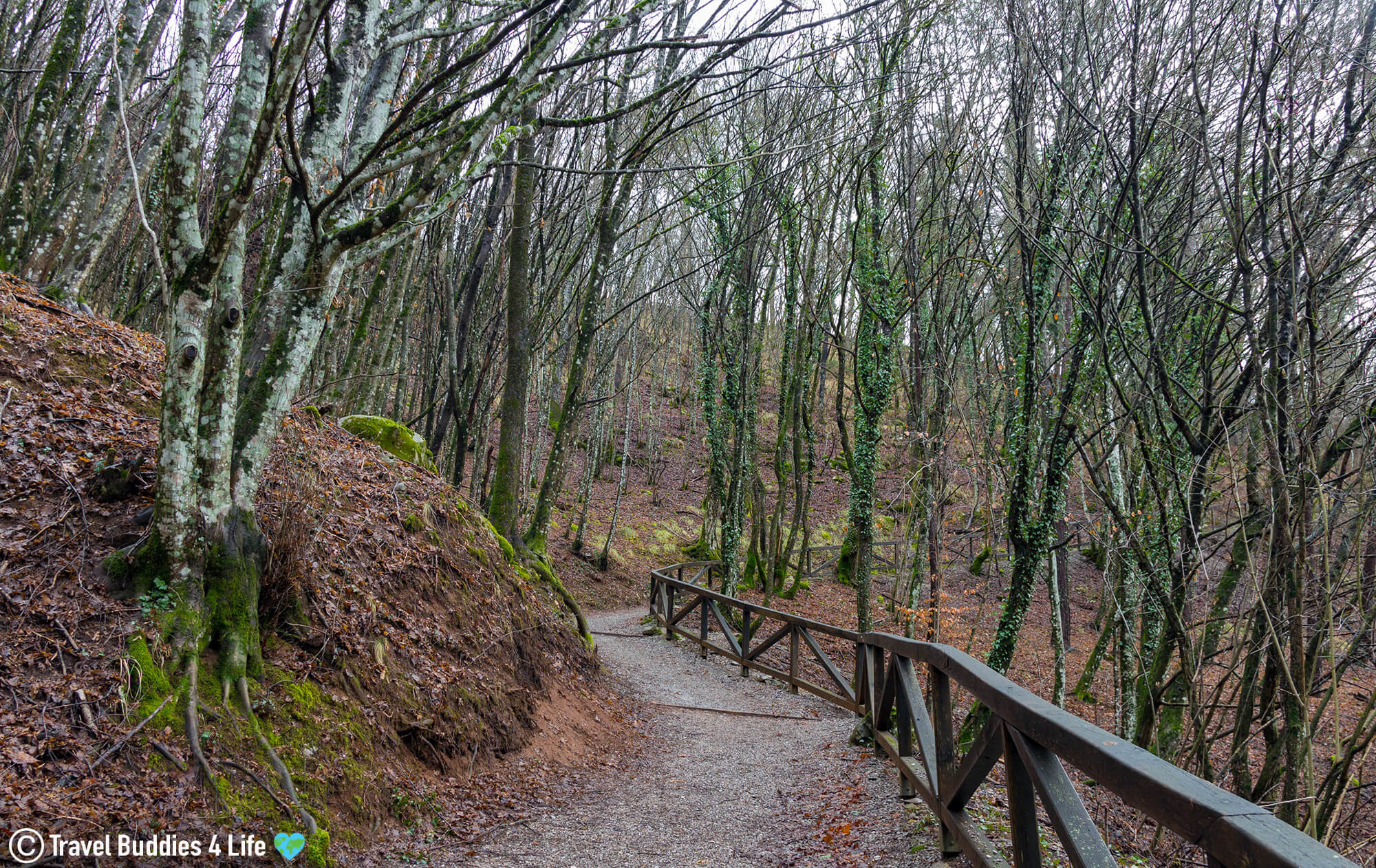 Walking Through the Woods of the Karst Region to the UNESCO Heritage Site Škocjan Caves in Slovenia, Europe