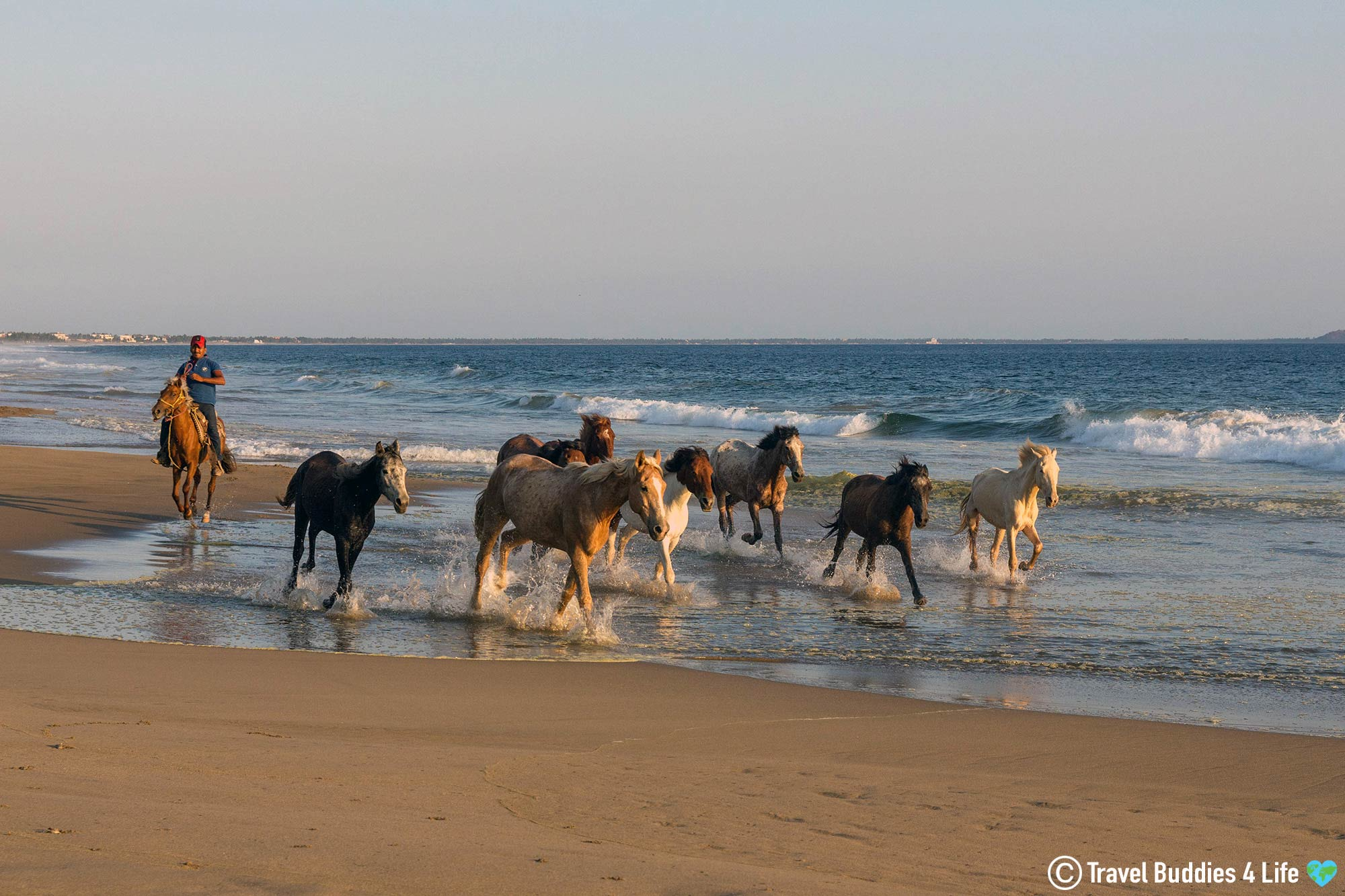 Wild Horses On A Beach In Zihua, Mexico Sunset Adventures