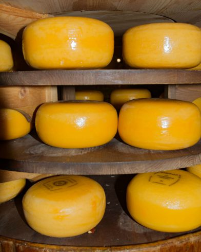 Yellow Dutch Cheese Wheels On A Shelf In Gouda