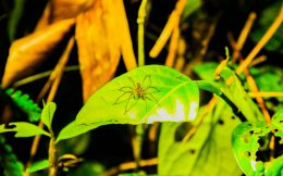 Small Wolf Spider